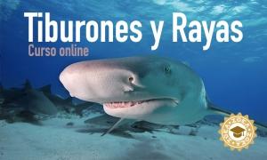 curso_tiburones_rayas