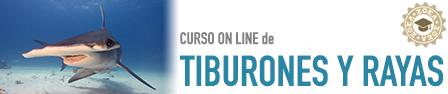 titulo_tibus_largo
