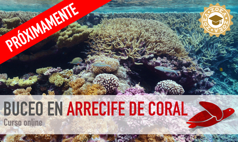 curso_arrecife2