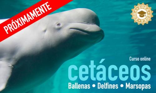 curso_cetaceos2