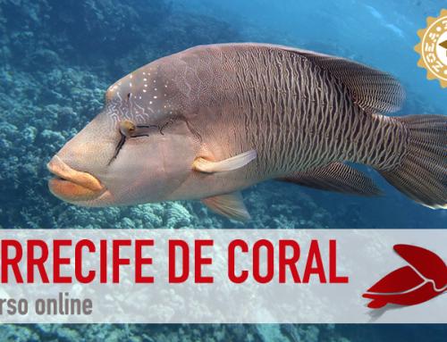 Ya está disponible el curso online de Arrecife de Coral