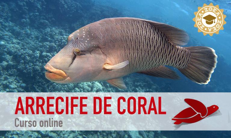 curso_arrecife