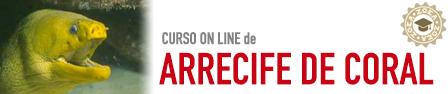 ARRECIFE_CURSO_ONLINE