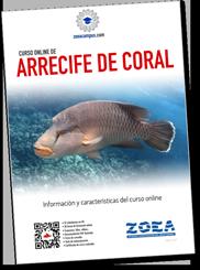 Información completa del curso online de Arrecife de coral