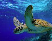 curso online de arrecife de coral