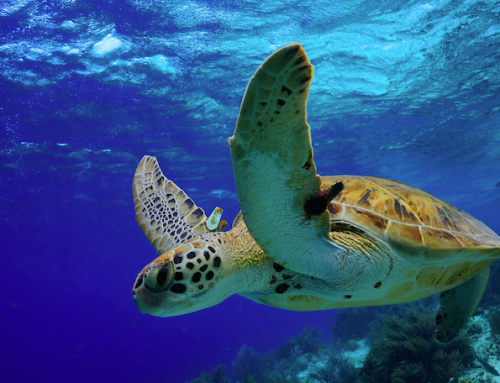 Seguimos preparando materiales para los cursos online de biología marina